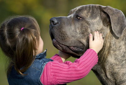 little girl with mastiff