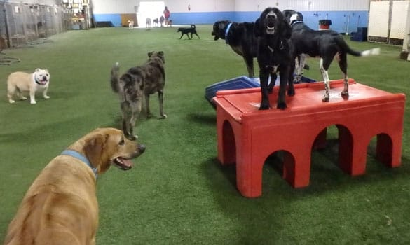 Dog Daycare Middletown NJ